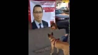 Victor Ponta fugarit de un caine lup