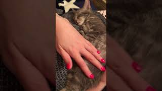 Миленький ласковый котенок ищет свой дом отдам в добрые руки