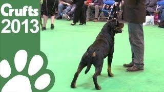 Rottweiler - Best Of Breed - Crufts 2013