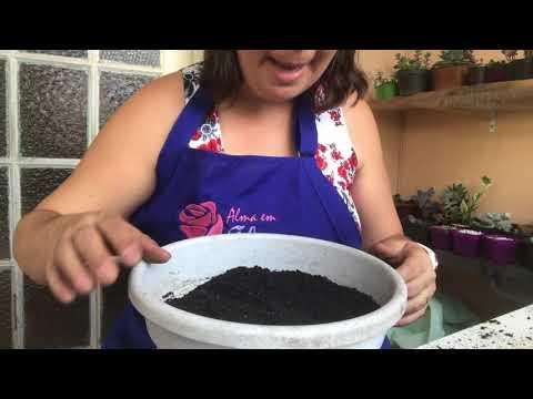 Montando um vaso de Hoya carnosa parte 1