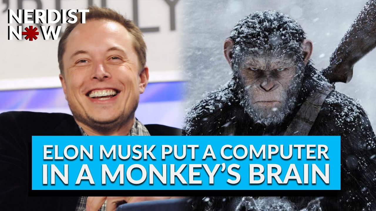 Artificial Intelligence Is On The Side Of Apes? Tesla-Fame's AI ...