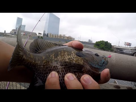 Have you Ever Suffered from the PANFISH CURSE?! (Philadelphia, PA)