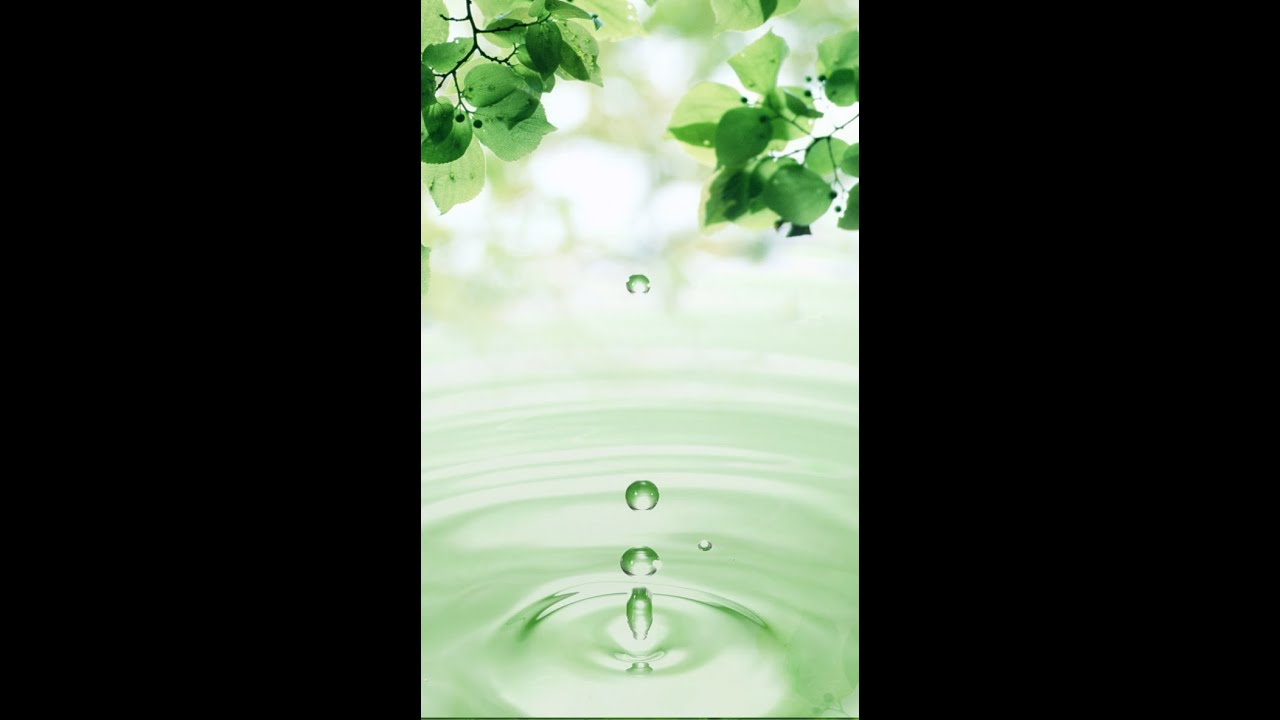 Leaves And Water Drops Live Wallpaper YouTube