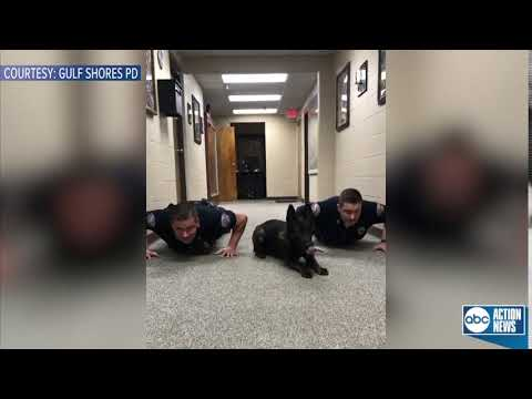 K9 Nitro does push-ups with Alabama police officers to promote 9PM routine