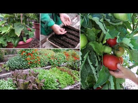 5-gallon-bucket-vegetable-gardening