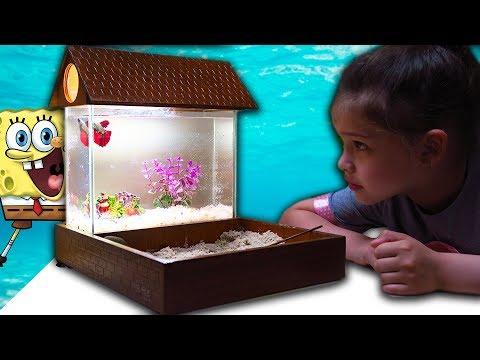 ПЕРВЫЙ АКВАРИУМ с Рыбка петушок ЗАСЕЛЕНИЕ КАК УХАЖИВАТЬ