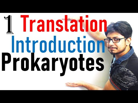 Translation in prokaryotes introduction | prokaryotic translation lecture 1