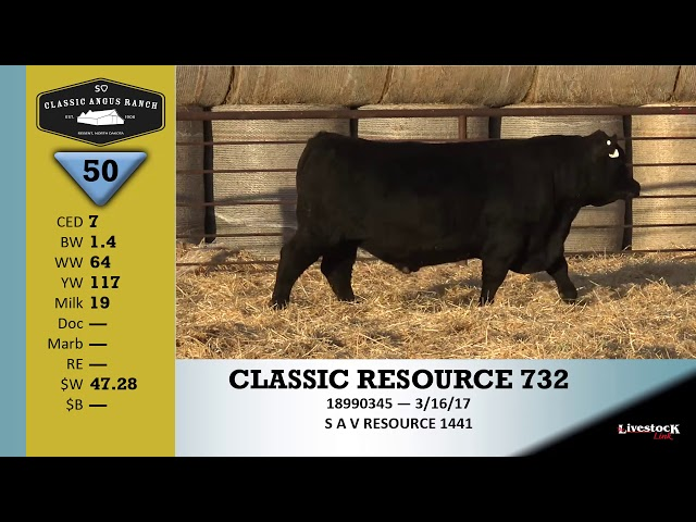 Classic Angus Ranch Lot 50
