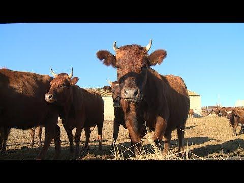 Господдержка позволяет фермерам заняться племенным животноводством