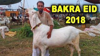 Bakra eid 2018 : History Of Bakrid Festival | Story behind Bakrid |  बकरा ईद कब है?