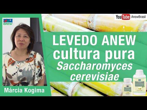 Levedo Anew - Saccharomyces cerevisiae de cultura pura
