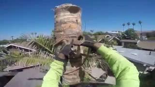 queen palm removal usando el chorizo ,Rigging