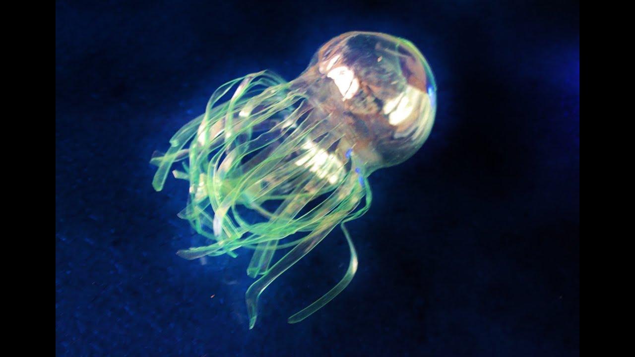 Populares De botellas de plástico a medusas. De basuras marinas a sueños del  HJ55