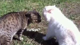 Кот матершинник Говорящие коты Приколы с котами Смешные животные