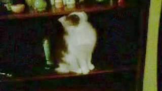 Кот, размышляющий о времени, после воровства