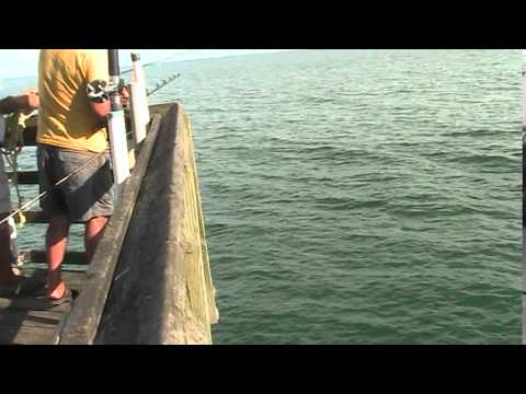 KING MACKERAL FISHING FROM SURF CITY OCEAN PIER 10/7/14
