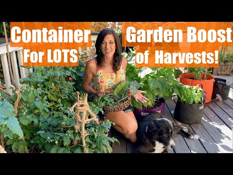 how-to-do-a-container-garden-mid-season-boost-to-keep-harvests-coming/container-garden-series-#5
