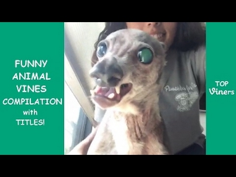 try-not-to-laugh-challenge---funny-cat-&-dog-vines-compilation-2017