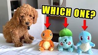 Puppy Chooses His Starter Pokemon!