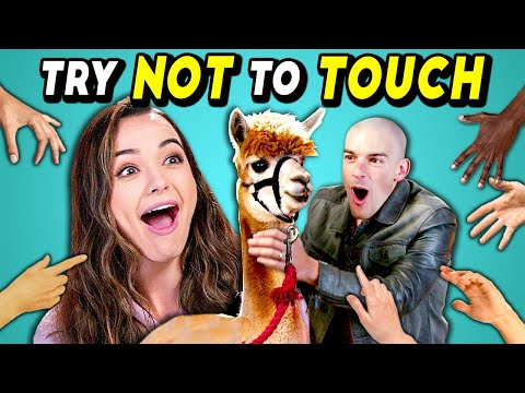 Try Not To Touch Challenge (ft. an Alpaca & YouTube Stars!)