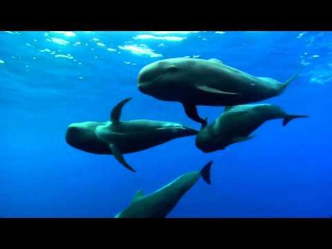 Фатастические съёмки подводного мира