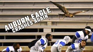 Auburn Eagle crashes again