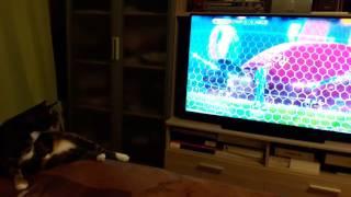 Кошки тоже любят футбол, Чемпионат Европы 2016