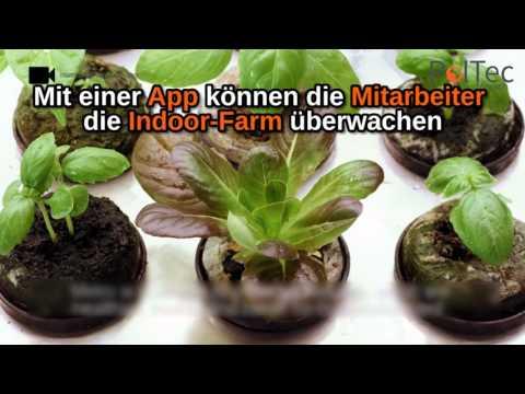 Indoor Farming im Supermarkt: Frischer geht's nicht