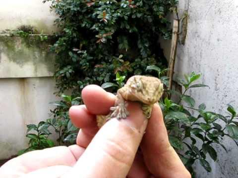 Cazando una lagartija