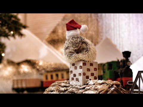 Hedgehog Christmas! In 4K! | DEVINSUPERTRAMP - YouTube
