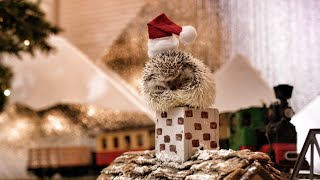 Hedgehog Christmas! In 4K! Thumbnail