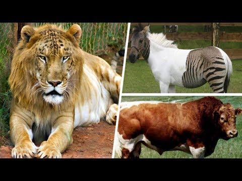 Hibrit Olarak ÜRETİLMİŞ 10 Hayvan