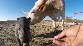hand feeder