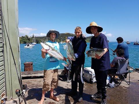 NZ Fishing/ 5 Kingies Of Mangonui Wharf Northland 2019
