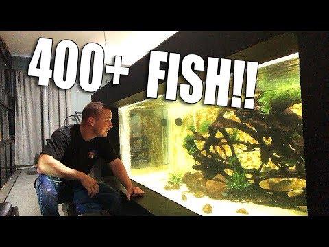 I ORDERED 400+ FISH!!