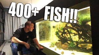 I ORDERED 400+ FISH!! thumbnail
