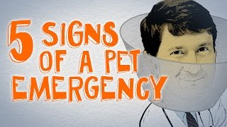 You NEED to Know About These 5 Pet Emergencies (Breathing & Digestion)