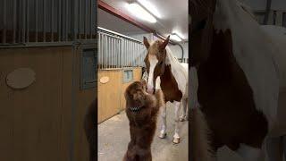 Dog and Horse Have a Hug || ViralHog