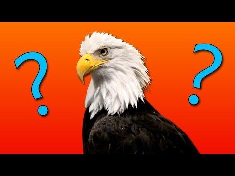 Q&A [Questions & Answers] W/ Slam
