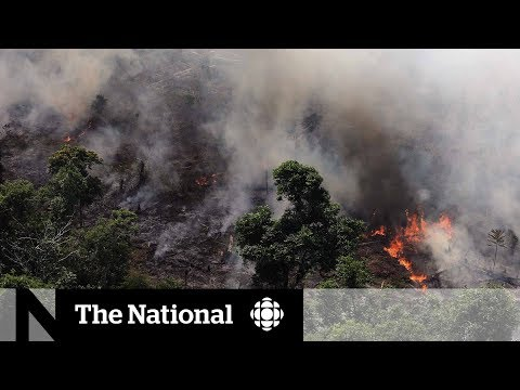 Amazon rainforest scorched