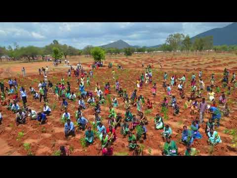 Miyawaki Plantation by Siruthuli at Anna Univesity Coimbatore