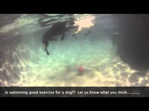 Is swimming good exercise for a dog?