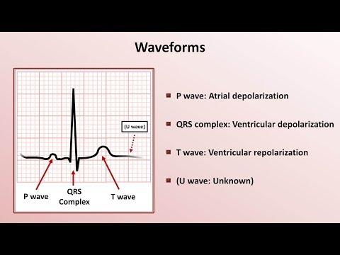 Intro to EKG Interpretation - Waveforms, Segments, and Intervals