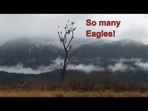 An incredible Eagle boat tour - live