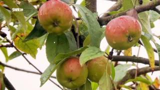 Äpfel - die gesündeste Verführung der Welt