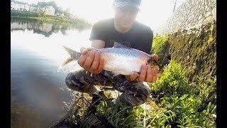 Shad fishing - river Suir - 4K