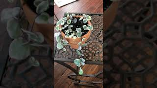 Variegated string of hearts - not an unboxing but almost