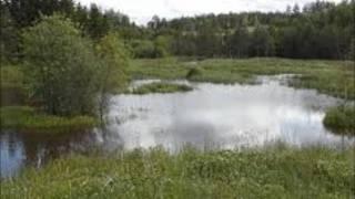 Olle Ljungström-Vatten,Sol och Ängar