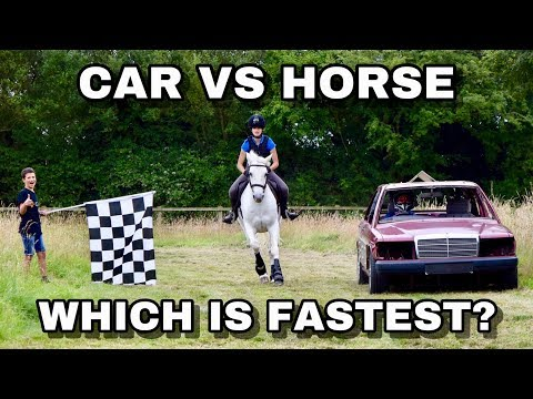 Car Vs Horse // Which Is Fastest?