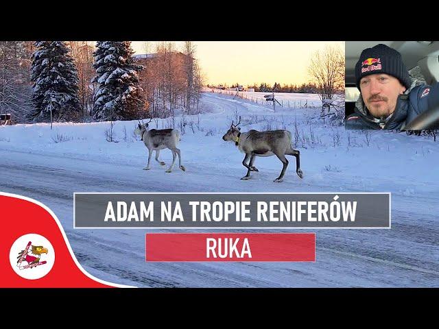 Adam szuka RENIFERÓW | Wycieczka za KOŁO PODBIEGUNOWE | Puchar Świata Ruka